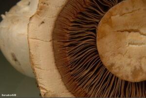 particolare di fungo in primo piano
