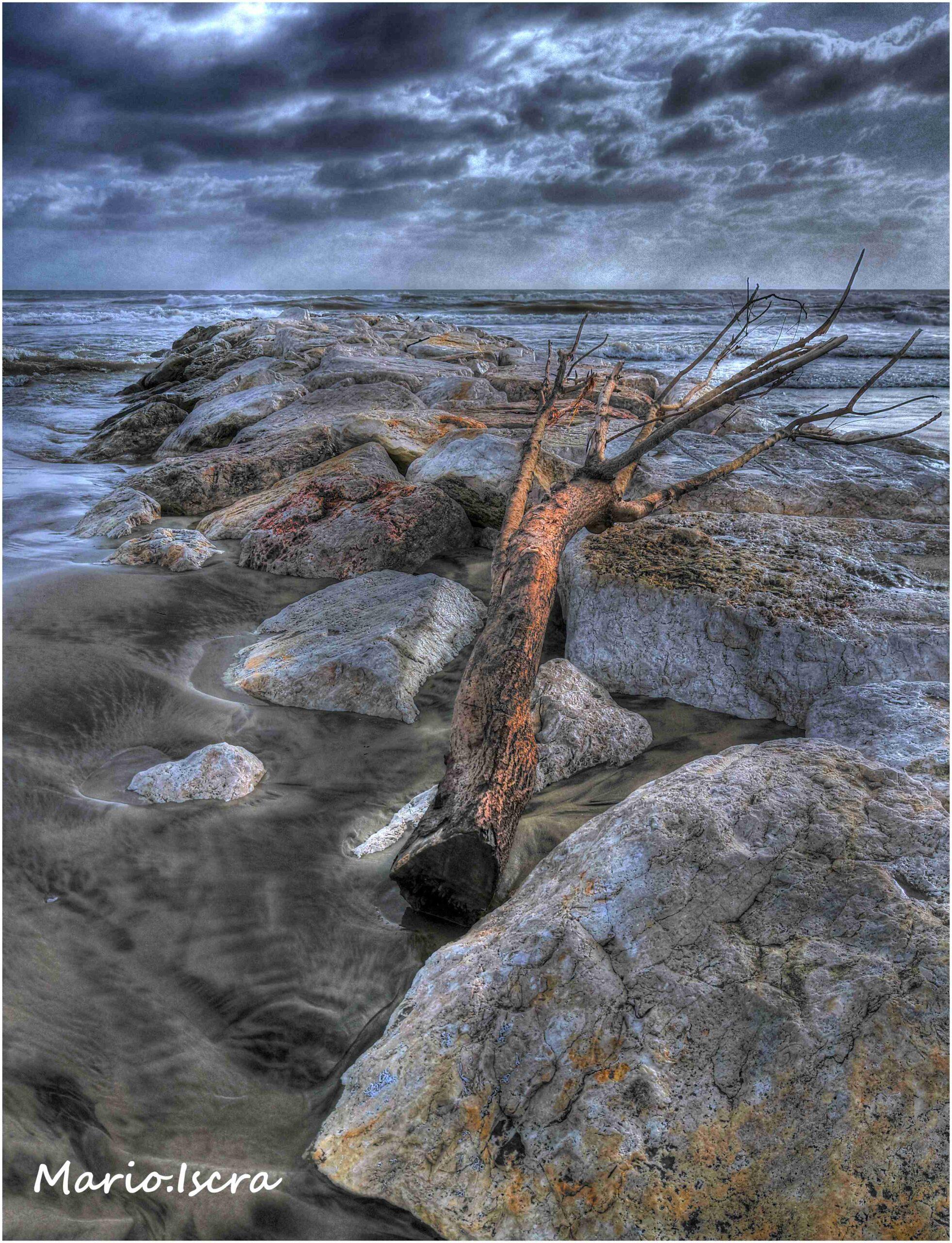 forza del mare tronco albero tra scogli