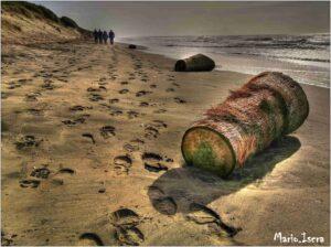 tronco sulla spiaggia inverno