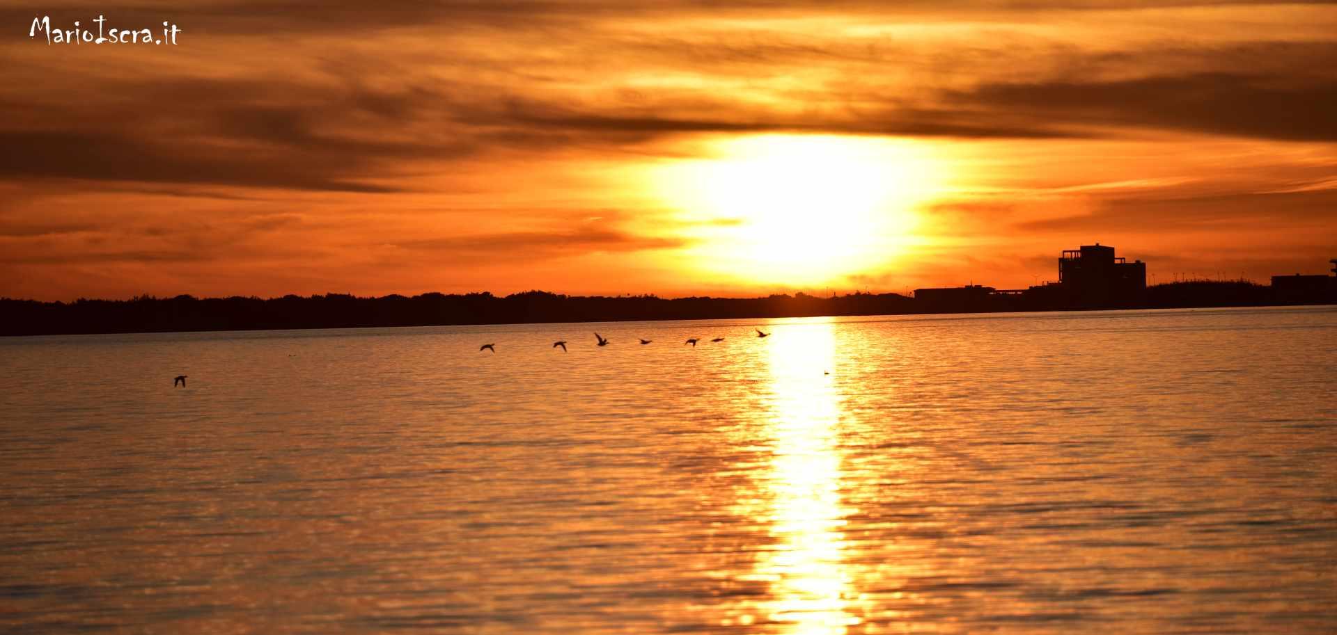 lago di fogliano uccelli in volo