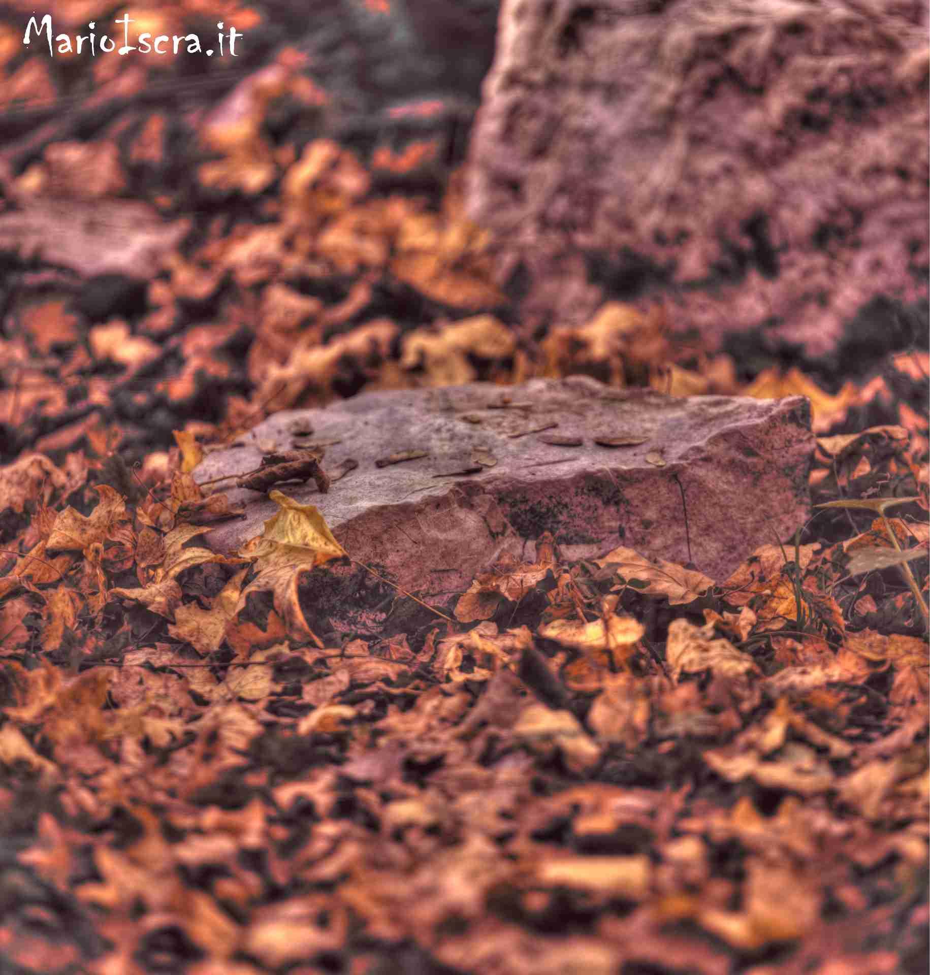 particolare sasso con foglie